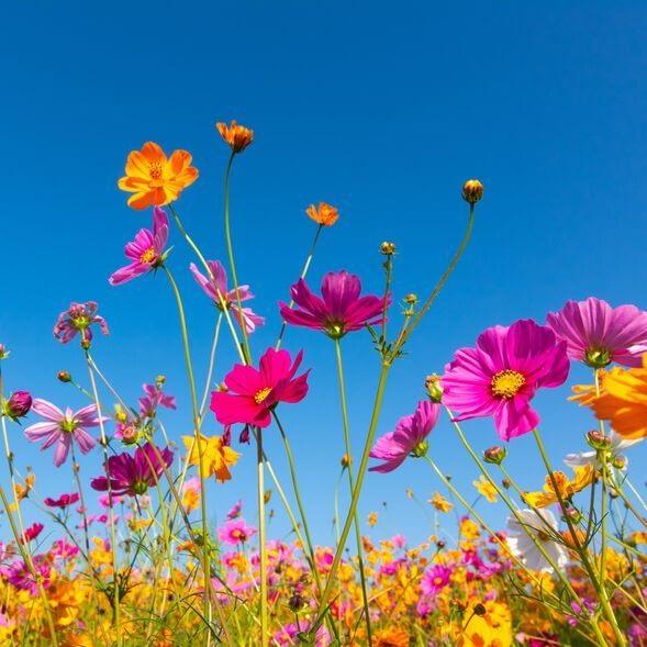 WildflowerBreeze V001352 Main