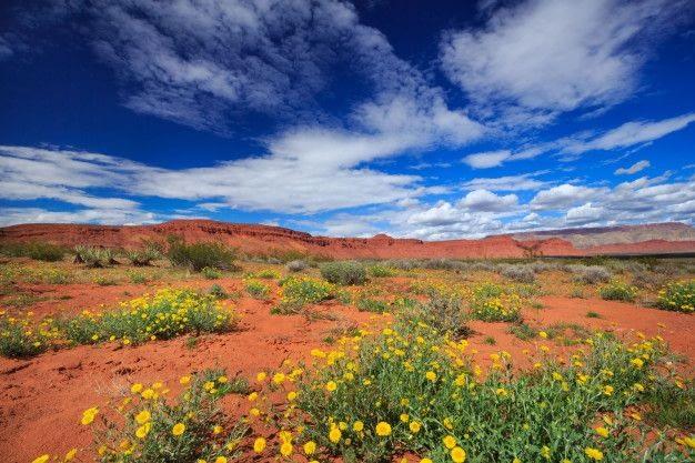 flores-silvestres-calendula-desierto-primavera-paisaje-utah_119570-388