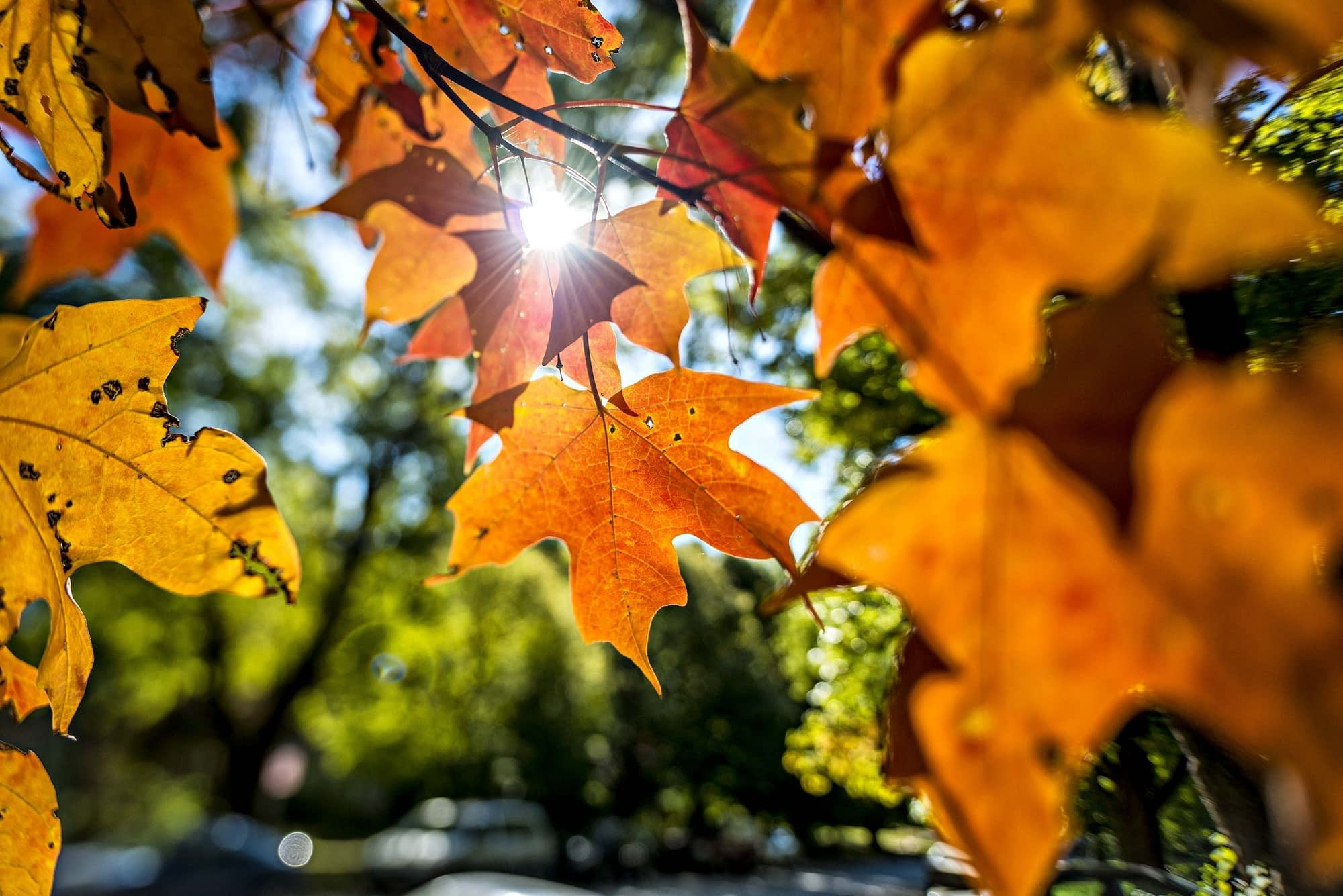 close up of autumn leaves in park royalty free image 1594851165
