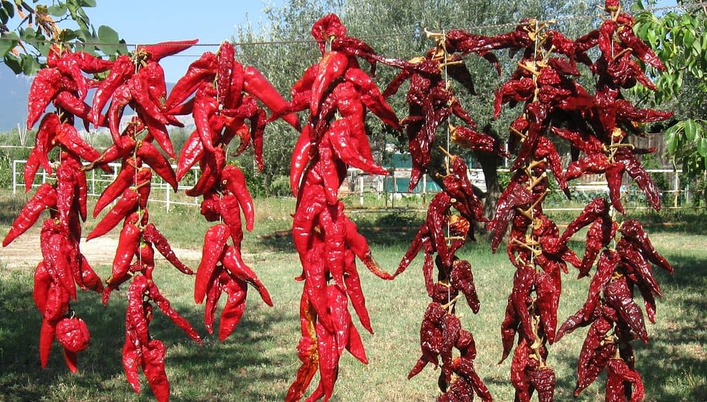 chiles secos 1